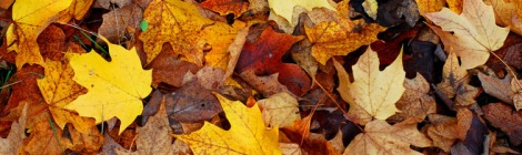 5 Ways to Put Fall Leaves to Work in Your Garden