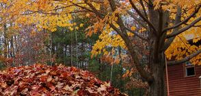 Garden Myths to Debunk as You Dig This Fall and Rest Over Winter