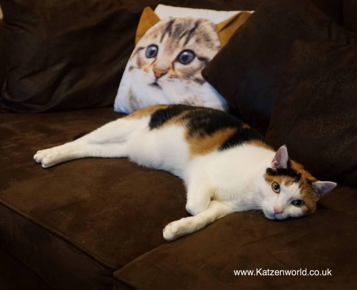 Hannover Cat Cafe