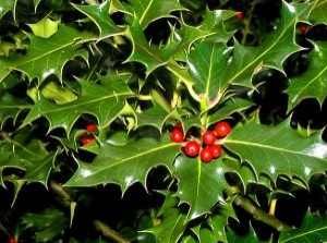 Symbol of Yule: Holly Mistletoe and Bayberry Candles