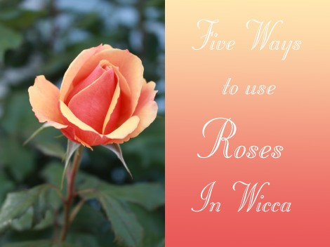 5 ways to use roses in wicca