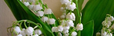 Flowers: Symbols of Beltane
