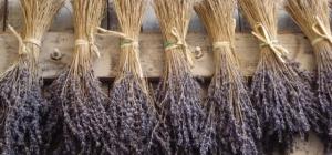 Harvesting Herbs II: Drying Herbs