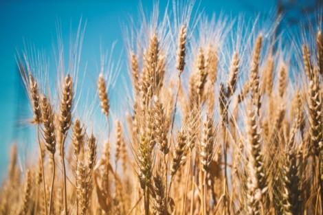 Correspondence of Lughnasadh, Lammas, First Harvest