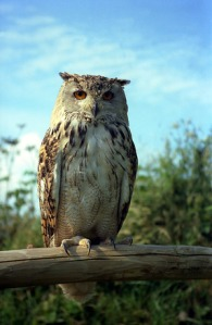 Owl and Samhain