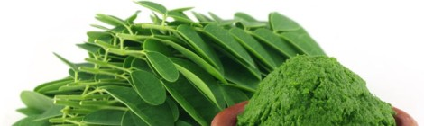 "Superfoods: Moringa the ""Miracle Tree"""