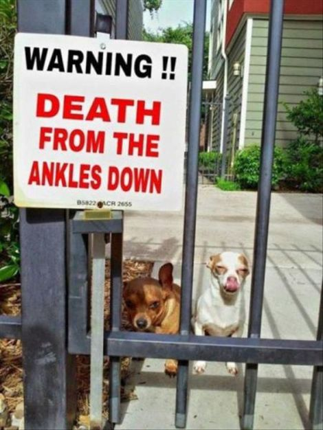 dogdeath