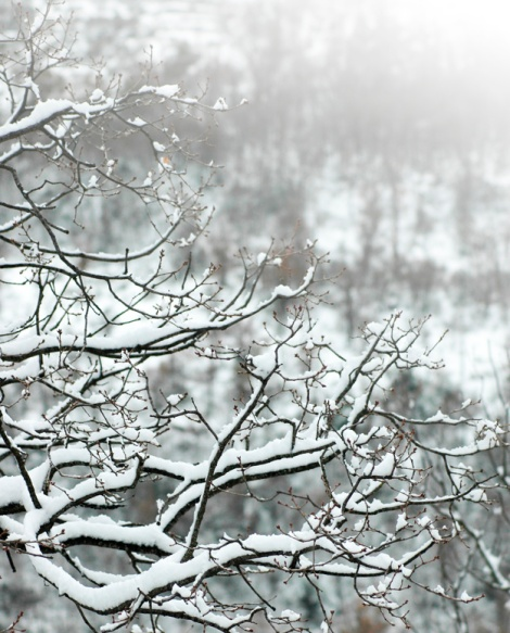 branches-of-a-tree-covered-with-snow_1123-97