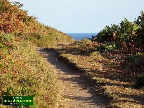 42-walk-coast-path-brittany-gr-34
