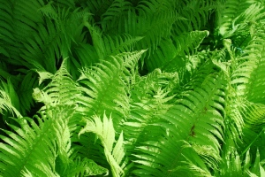 Fern Magic