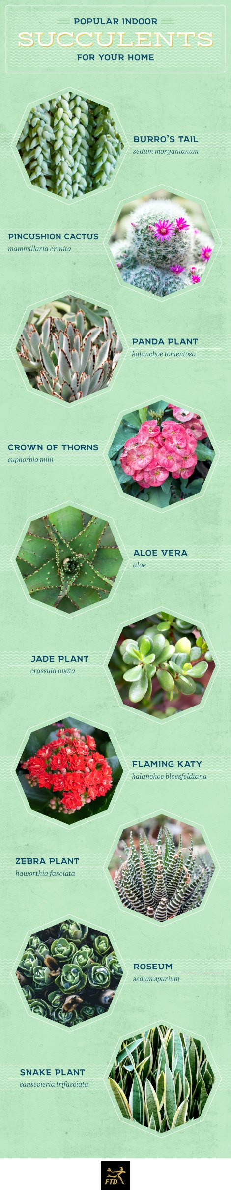 types-of-succulents-indoor