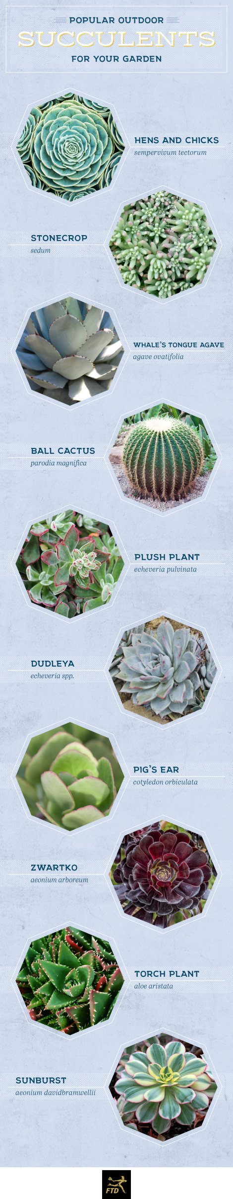 types-of-succulents-outdoor
