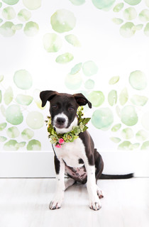 Pet's Place: DIY Projects and a Pup Named Griffin