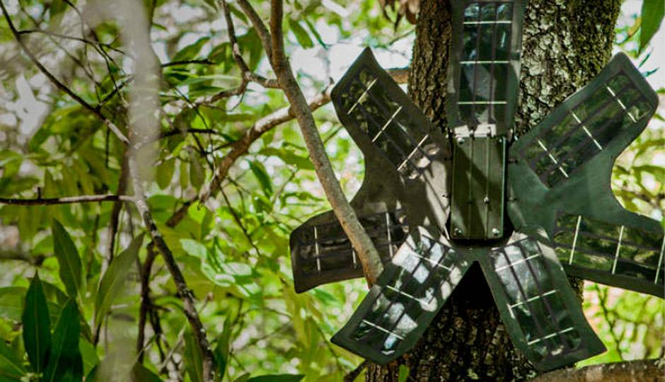 Rainforest Connection: Using smartphones to save the rainforest