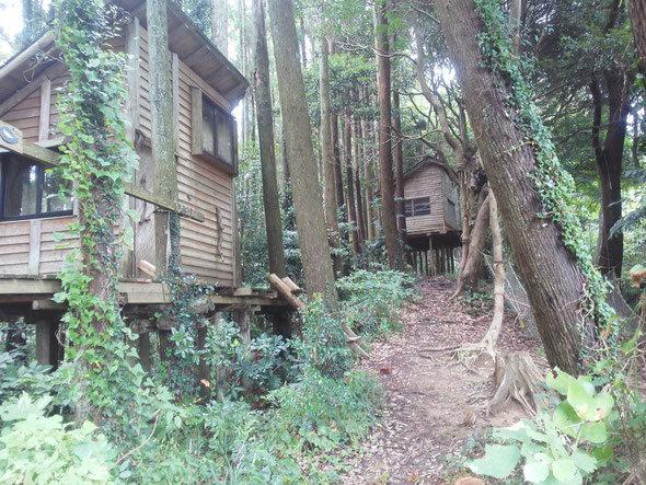 Gankoyama: Japan's sustainable tree house village