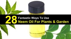 neem-oil-for-plants-titlimg1