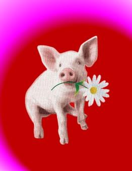 Pig Valentine 2