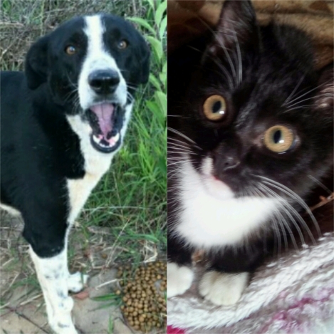 https://gogetfunding.com/help-for-rescue-pets-in-brazil/