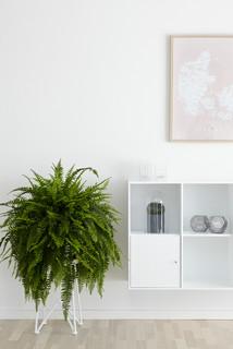 10 Home-Wellness Essentials for a Healthy Life