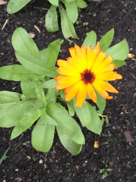 Weleda Gardens: Experiencing a medicinal plant garden in England's Derbyshire