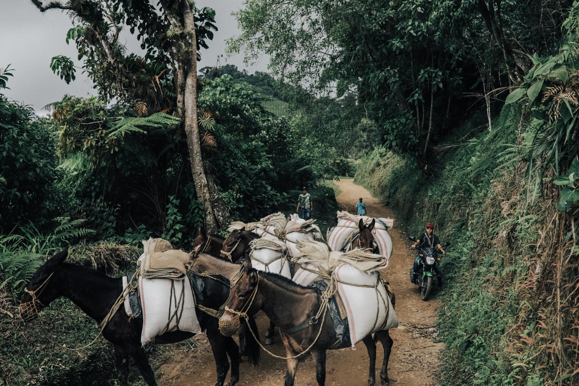 Eco-Friendly Colombia Coffee Farming On The Steep Hills Of Sierra Nevada — Edge of Humanity Magazine