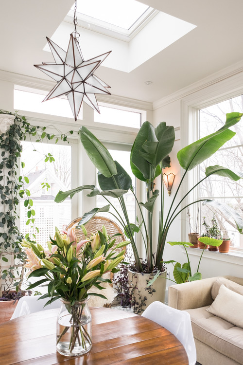 8 Tips for Keeping Your Houseplants Healthy in Winter