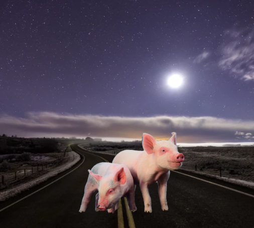 Pigs Road Moon unsplash composite