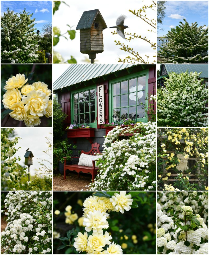 Garden Smiles and Spring Blooms — Home is Where the Boat Is