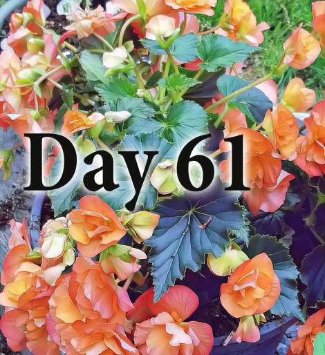 Day61