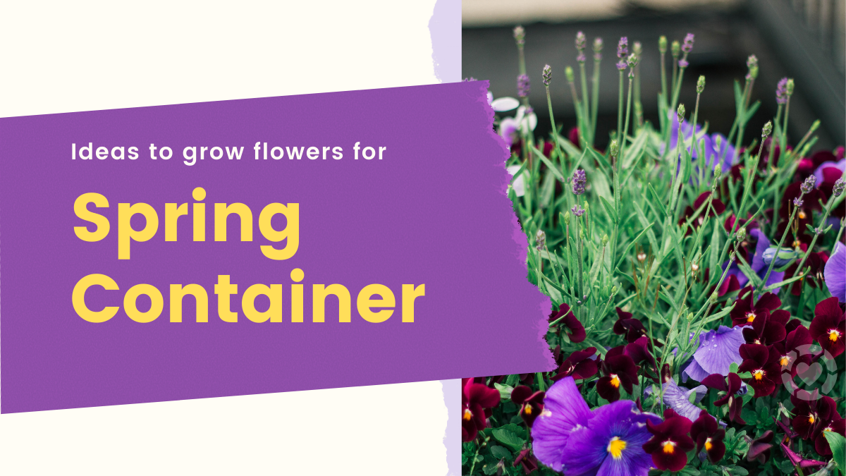 Ideas to Grow Flowers for Spring Containers