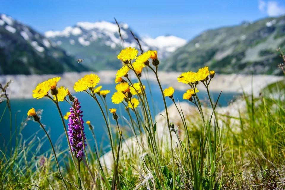 WEEKLY SPIRITUAL ENERGY- June 14, 2021 – June 20, 2021, by Lady Dyanna
