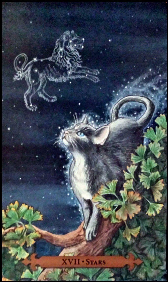 Tarot Guidance for Wednesday 4 August 2021: The Star —