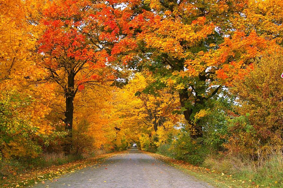 WEEKLY SPIRITUAL ENERGY- October 25, 2021 – October 31, 2021, by Lady Dyanna — Lady Dyanna Spiritual Life Coach| Intuitive Reader |Tarot Reader