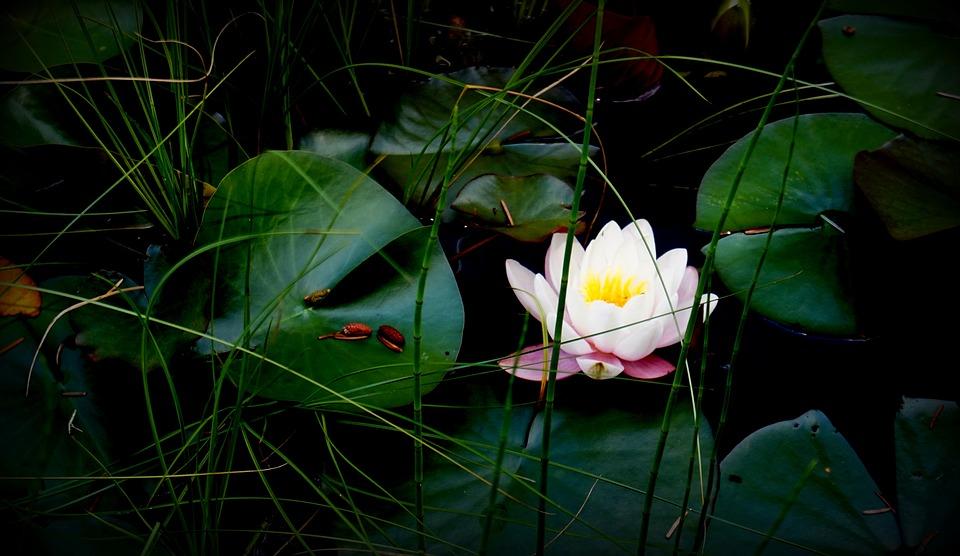 WEEKLY SPIRITUAL ENERGY- October 18, 2021 – October 24, 2021, by Lady Dyanna — Lady Dyanna Spiritual Life Coach| Intuitive Reader |Tarot Reader